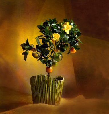 цветы, фитодизайн