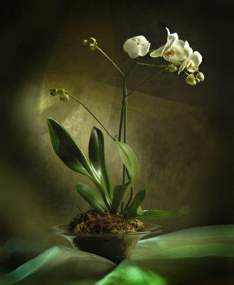 цветы фитодизайн
