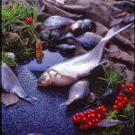 Еда - fotostep.ru - рыба