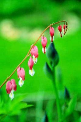 розовое на зеленом